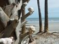 shells at Botany Bay