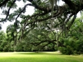 ~the grounds of Hampton Plantation~