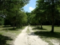 ~the original drive to Hampton Plantation~
