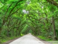 Road to Botany Bay - Edisto Island, South Carolina