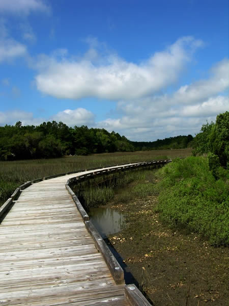 ~boardwalk at the shell ring trail~