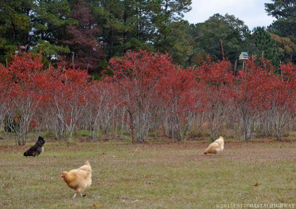 ~Blue Pearl Farms, McClellanville, South Carolina~   ~~~~~