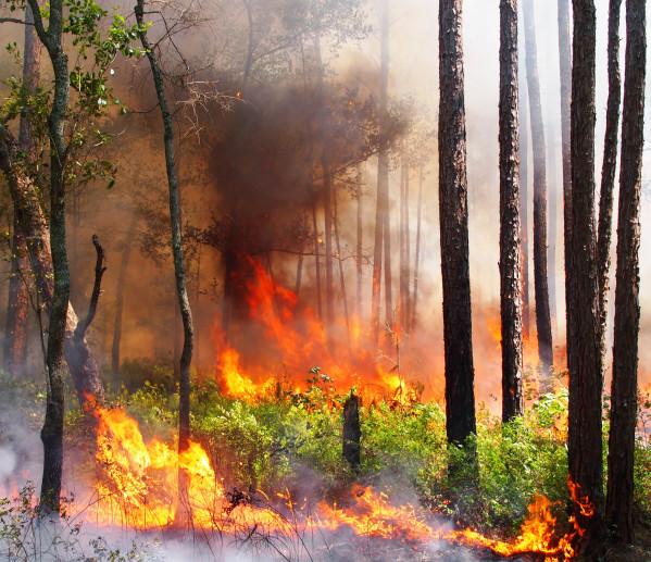 A longleaf flat woods burn, Reed Bingham State Park (Adele, GA)